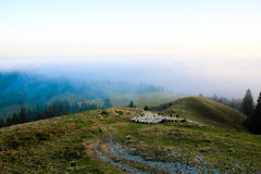 Flock of sheep on top of the mountain, high altitude landscape Stock Images