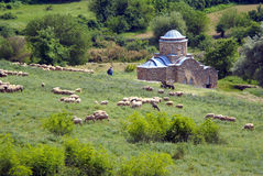 Flock of sheep on wooded slope. Near monastery on a summer day Stock Photo