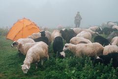 Flock of ships near tourist camp in foggy mountains Stock Photography