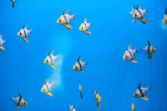 A flock of small beautiful fish stock images