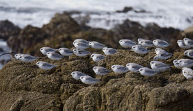 Flock of small birds resting Royalty Free Stock Photo