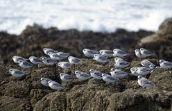 Flock of small birds resting Royalty Free Stock Image