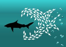 Flock of small fish and shark Stock Photo