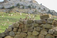 A flock of sparrows on the background of the mountain stock photos