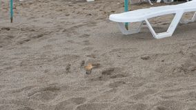 Flock of sparrows in the sand. Birds on the background of beach loungers. Full HD stock footage