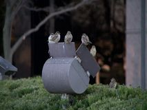 A flock of sparrows. Sitting on light reflector during the winter stock video footage