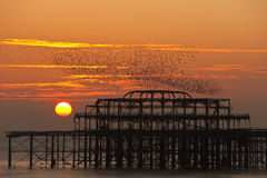 Flock of starlings over the West Pier, Brighton Royalty Free Stock Photo
