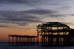 Murmuration over the ruins of Brighton`s West Pier on the south coast of England stock images