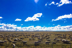 Flock in the sun Royalty Free Stock Image