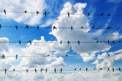 Flock of swallows Royalty Free Stock Photos