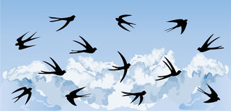 Flock of swallows flying  Stock Photography