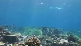 Flock of tropical fish on reef in search of food. A flock school of tropical fish on the reef in search of food. Amazing, beautiful underwater marine life world stock footage
