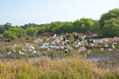 Flock Of Various Wading Birds Stock Image