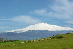Flock And Volcano Etna In Background royalty free stock photo