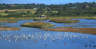 Flock of waterbirds in Black Hole Marsh Royalty Free Stock Images