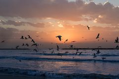 Flock Of White Birds Photo During Sunset royalty free stock images