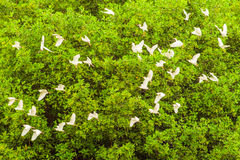 Flock Of White Egrets Royalty Free Stock Photography