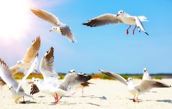 Flock of white sea gulls stock images