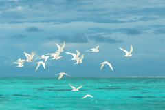 Flock of White Seagulls Flying over the Large Body of Water stock photos