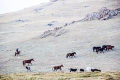 Flockar near sången Kol Arkivbilder