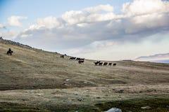 Flockar near sången Kol Arkivfoto