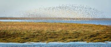Flockas fågeln Arkivbild
