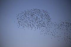 Flockas för fåglar royaltyfri bild
