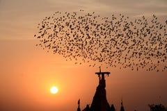 FLOCKAS UPPFÖRANDE I FÅGLAR Bikaner Rajasthan Arkivfoto