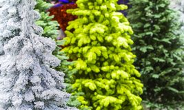Flocked Christmas Tree with multi colors. Artificial snow covered fir Stock Image
