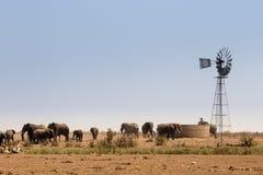 Flocken av afrikanska elefanter på det konstgjorda vattenhålet, Kruger parkerar, Sydafrika royaltyfria foton