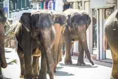 Flocken av elefanter royaltyfri fotografi
