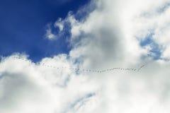 Flocken av fåglar i den blåa himlen Royaltyfri Fotografi
