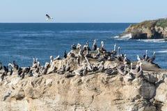 Flocken av fåglar på naturliga brudar vaggar Arkivbilder