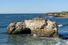 Flocken av fåglar på naturliga brudar vaggar Royaltyfri Foto