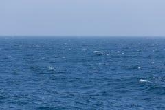 Flocken av fåglar på vita vapen av ett hav vinkar Selektivt fokusera Fotografering för Bildbyråer
