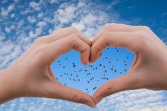 Flocken av fåglar som sågs bak en hjärta, formade handen arkivbilder