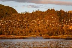 Flocken av fåglar tar flyg på solnedgången Arkivbild