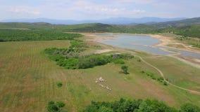 Flocken av får down berget på ängen bredvid sjön begrepp isolerad naturwhite Djurt begrepp flyg- sikt stock video