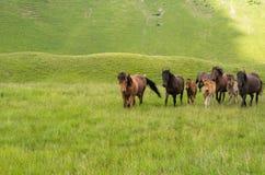 Flocken av hästar i bergen är Royaltyfri Fotografi