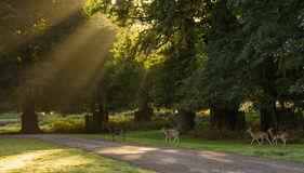 Flocken av hjortar parkerar in Arkivfoto