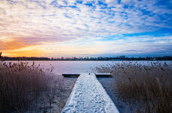 Flocken av svanar flyger över den djupfrysta sjön Elckie royaltyfri bild