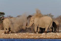 Flocken för den afrikanska elefanten gör ett damm att bada, etoshanationalpark royaltyfria bilder