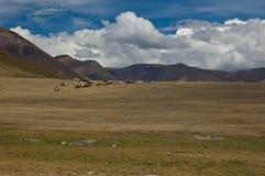flockhästar Royaltyfri Fotografi