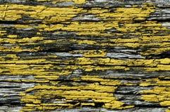 Flockiger gelber Lack auf Holz lizenzfreies stockfoto