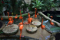 Flocking Flamingos. A group of exotic looking flamingos gathered together for some company, food, and conversation Royalty Free Stock Images