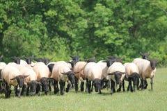 Flockmentalitet Fotografering för Bildbyråer