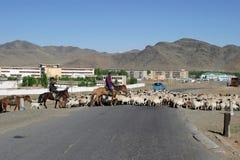 flockmongolia sheeps Royaltyfria Bilder