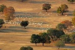 flockmorgon Arkivbild