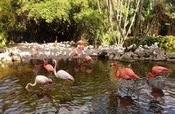 Flocks of beautiful flamingos and white ibis stock images