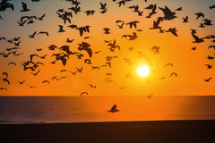 Flocks of birds above the line of surf at Atlantic ocean during sunset. Nature. Flocks of birds above the line of surf at Atlantic ocean during sunset Stock Photo